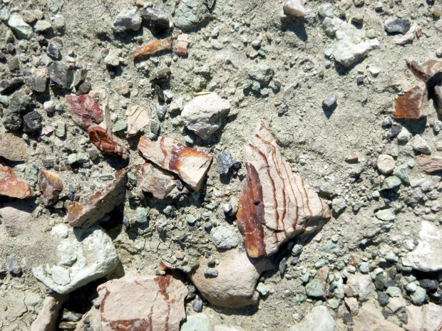 Rock shards along Island in Time Trail, Blue Basin, Sheep Rock Unit, John Day Fossil Beds, Oregon
