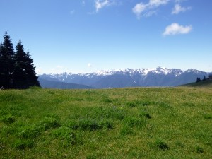 Alpine Meadows with Olympic Range in background, Olympic National Park
