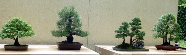 General view of the Pacific Rim Bonsai Collection, Federal Way, WA