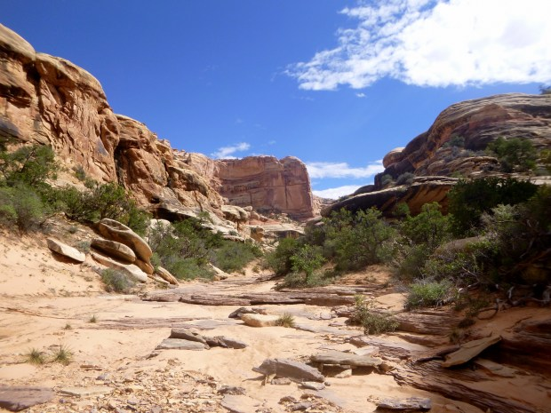 Trail in the wash of Elephant Canyon, Druid Arch Spur Trail, Canyonlands National Park, Utah