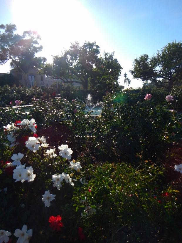 Fountain in Rose Garden, Balboa Park, San Diego, California