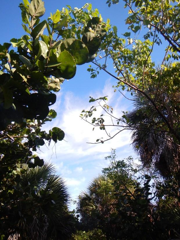 Vegetation along the Black Island Trail, Lovers Key State Park, Florida