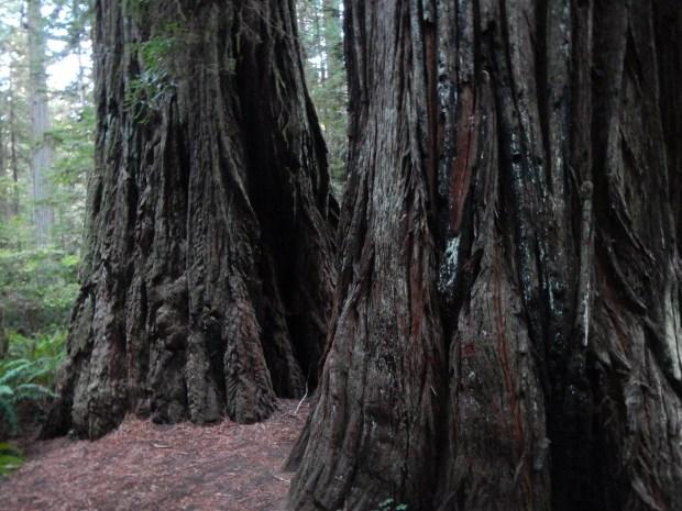 South Fork Trail, Prairie Creek State Park, California