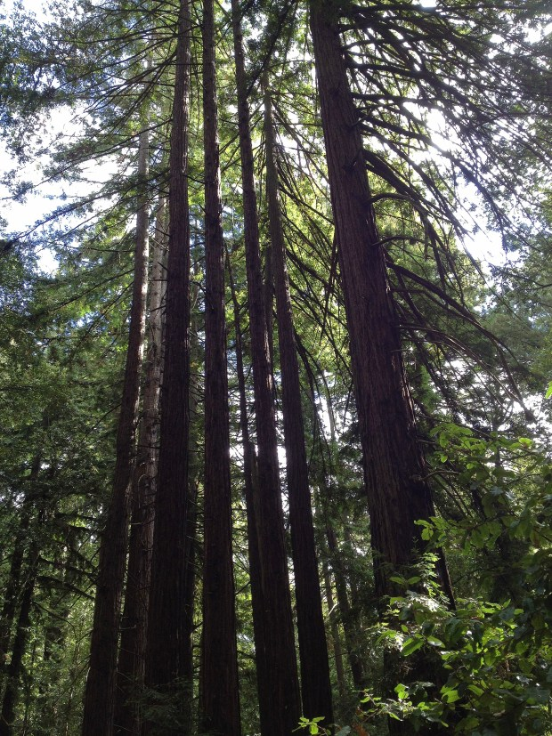 nick_redwoods_iphone 053