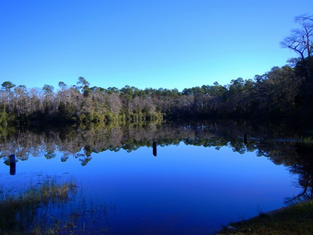 Wright Lake, Apalachiola National Forest, Florida