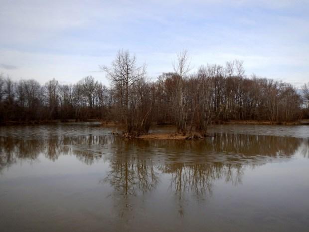 Island in Wood Deer Lake, Cypress Grove Nature Park, Jackson, Tennessee