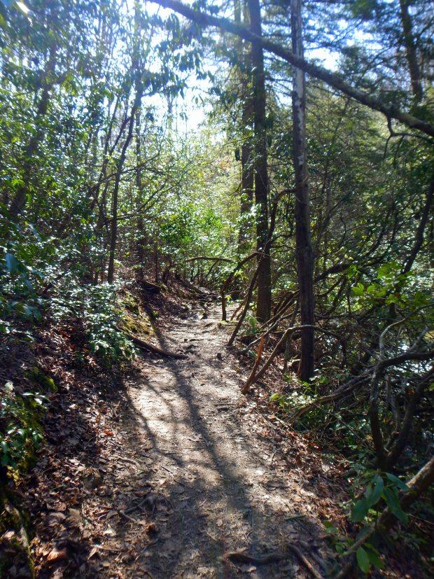 West Rim Loop Trail, Cloudland Canyon State Park, Georgia