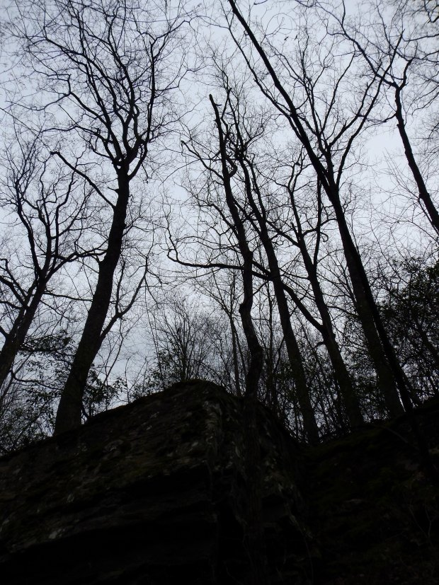 Looking up at the cliffs on the descent into Shake Rag Hollow, Perimeter Trail, Sewanee Domain, Tennessee