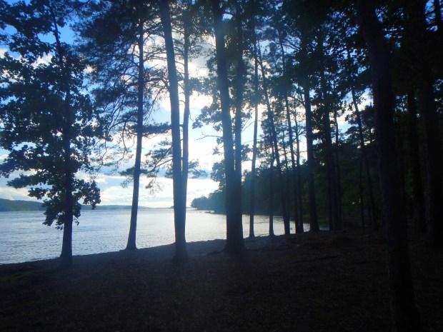 Trees along the shore of DeGray Lake, Arkansas