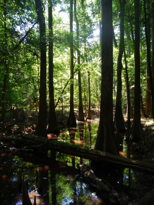 Weston Lake Loop, Congaree National Park, South Carolina