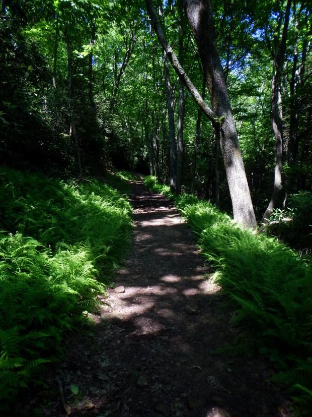 Ewing Trail, Cumberland Gap National Historical Park, Virginia