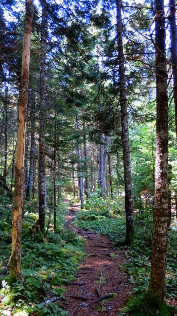 Hearst Lodge Trail, Fundy Trail, New Brunswick, Canada