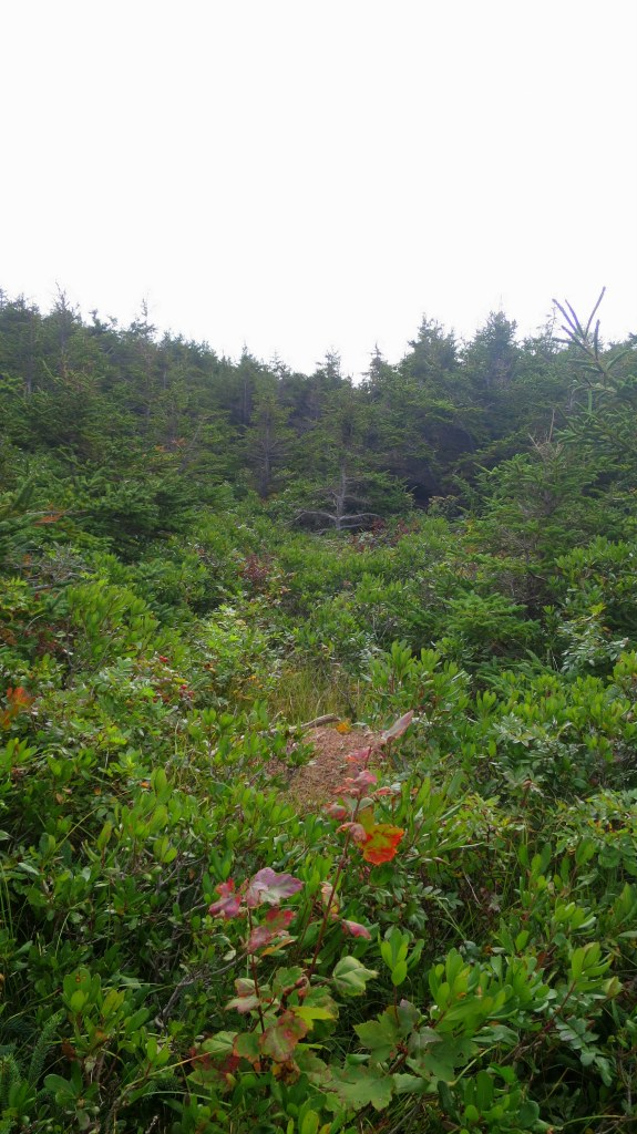 Looking back on forest edge and meadows, Western Coastal Trail, West Mabou Beach Provincial Park, Nova Scotia, Canada
