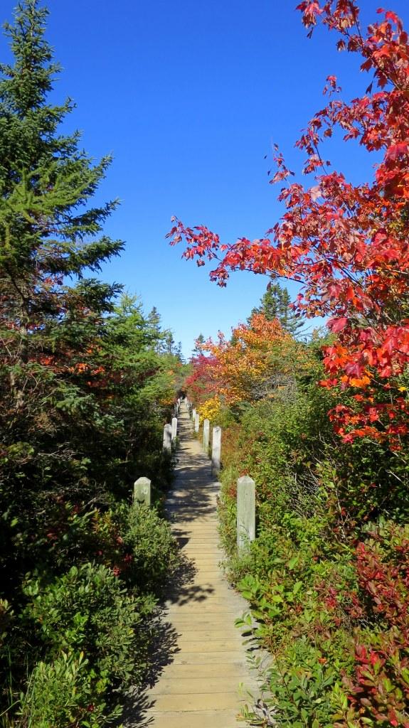 Raised section of Balanced Rock Trail, Long Island, Nova Scotia, Canada