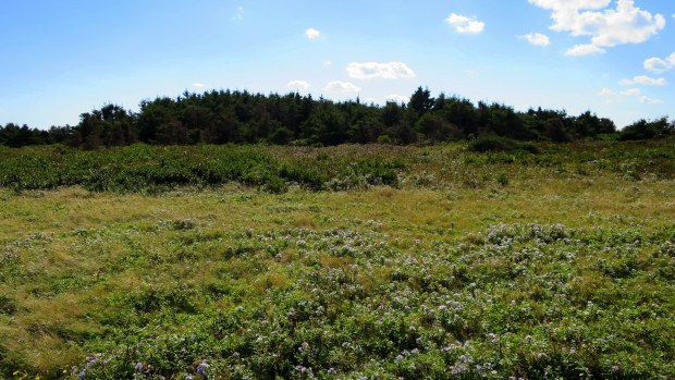 Meadow behind sandstone cliffs, Brackley-Dalvay, Prince Edward Island National Park, Prince Edward Island, Canada