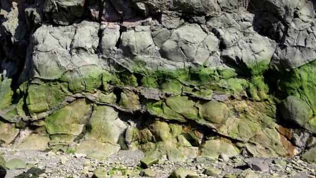 Cliffs with a stripe of algae, Wasson Bluff, Parrsboro, Nova Scotia, Canada