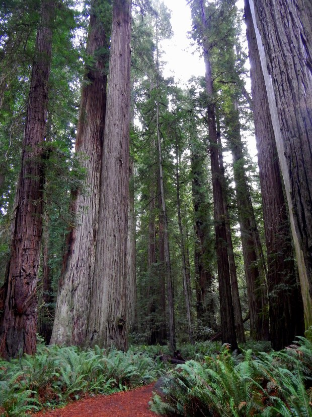Getty_to_Redwoods 1491