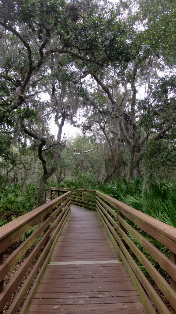 Trail through hammock, George C. McGough Nature Park, Largo Narrows, Florida