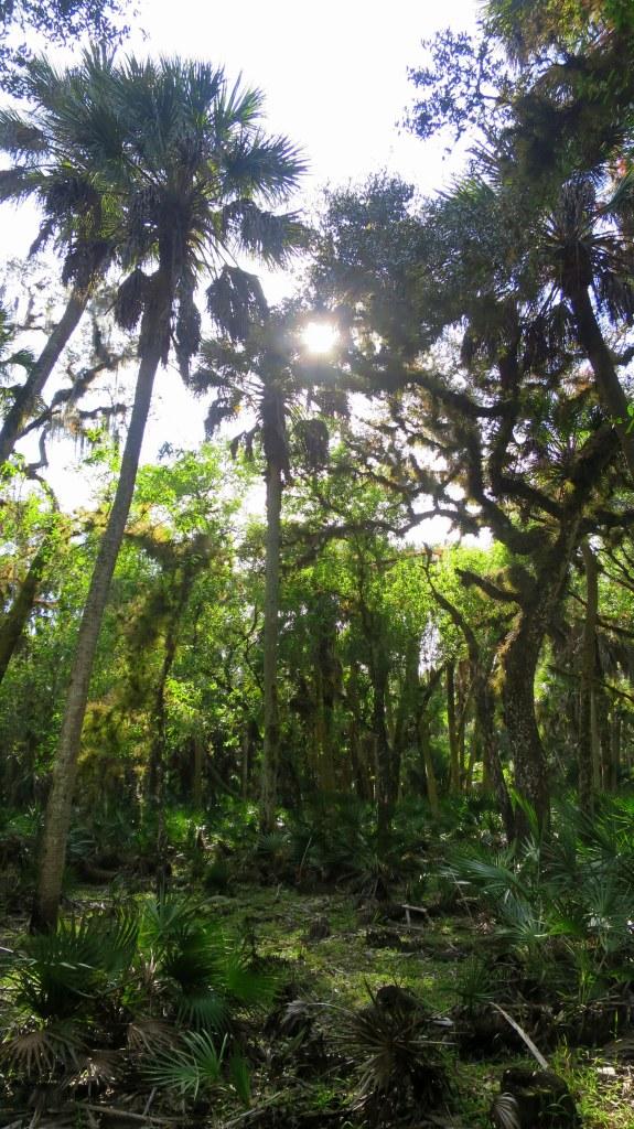 Boylston Nature Trail, Myakka River State Park, Florida