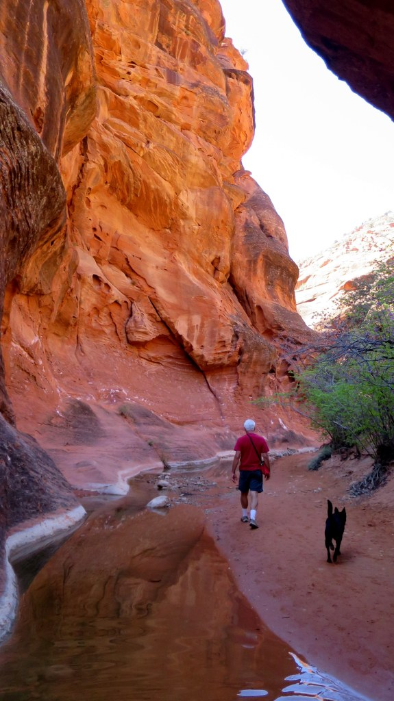 Tom and Abby walking ahead of me, Red Reef Trail, Red Cliffs National Conservation Area, Utah