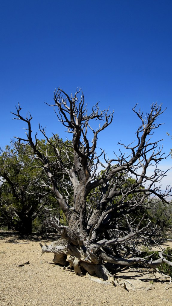 Twisted roots, Fiddler's Canyon, Cedar City, Utah