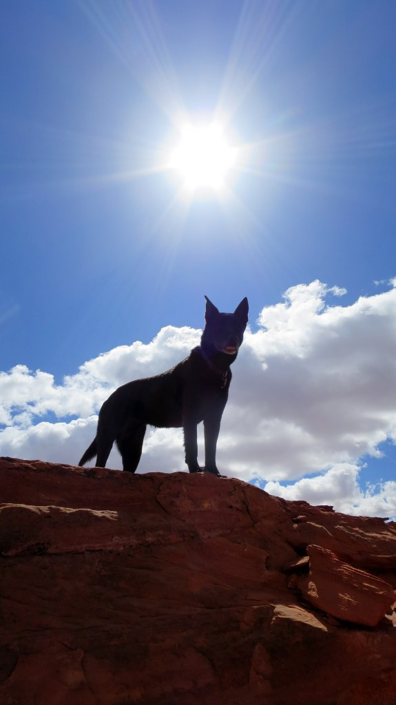 Abby wins again, Dino Cliffs, Red Cliffs Desert Reserve, Utah