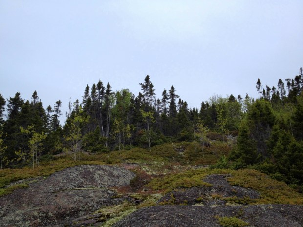 Mosses, lichens, and boreal forest in Carden Cove, Marathon, Ontario, Canada