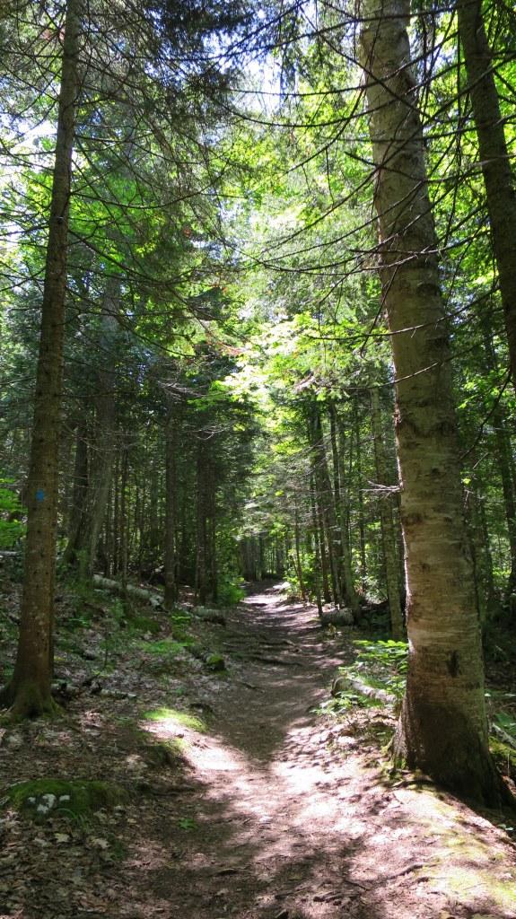 Cathedral Grove Trail, Estivant Pines Sanctuary, Michigan