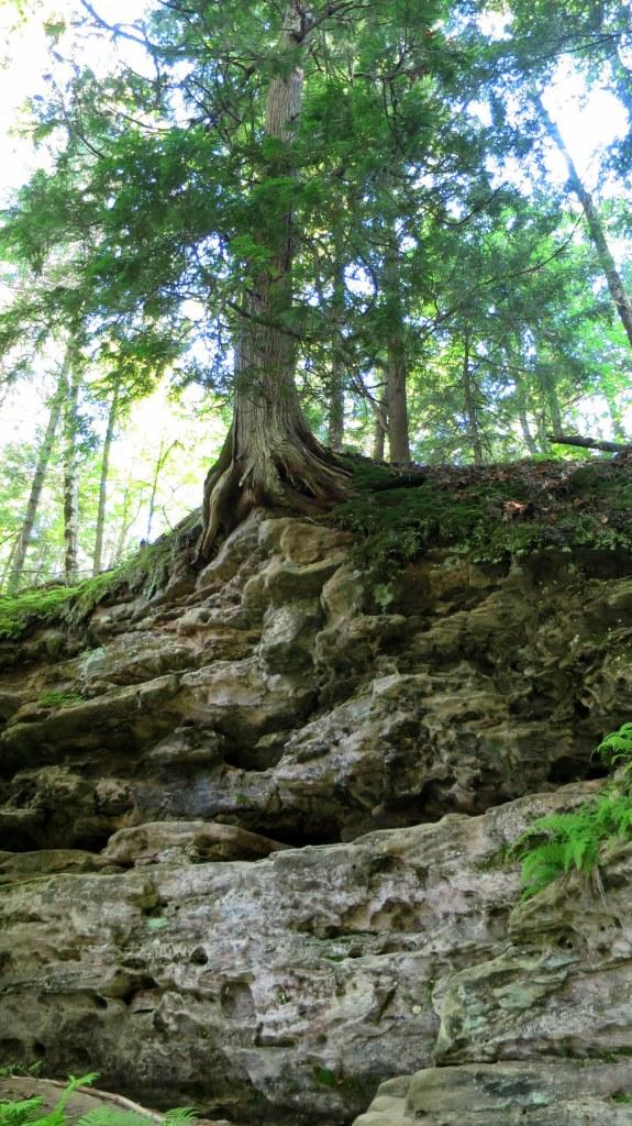 Tree above on rim of gorge, Memorial Falls, Munising, Michigan