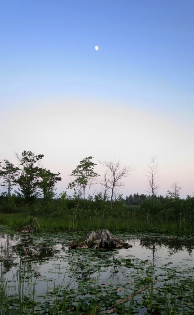 Moonlight over the wetlands, near Alpena, Michigan