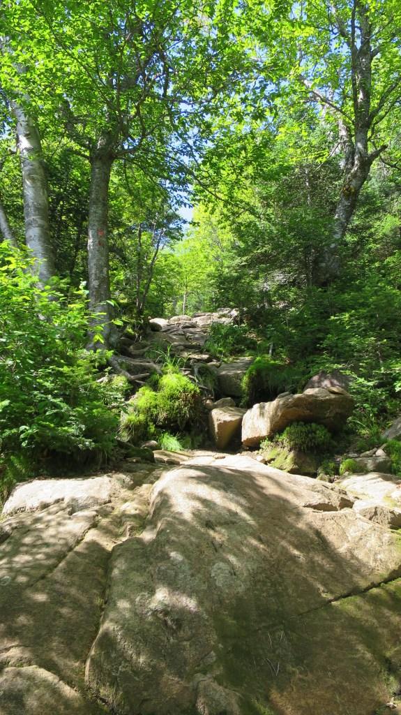 Snowy Mountain Trail, Adirondacks, New York