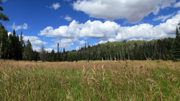 Meadows near Crystal Springs Trailhead, Dixie National Forest, Utah