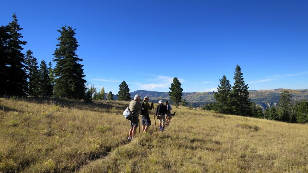 Crossing the big meadow on the Rattlesnake Trail, Ashdown Gorge Wilderness, Dixie National Forest, Utah