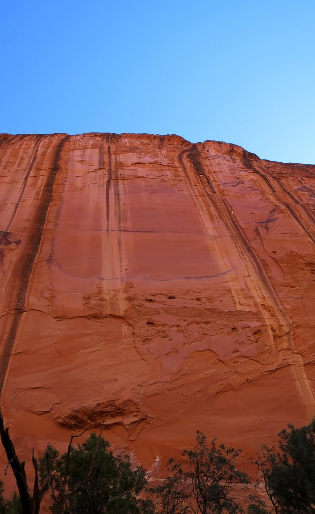 Looking up the walls in Long Canyon, Burr Trail, Grand Staircase-Escalante National Monument, Utah