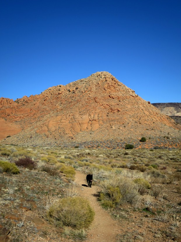 Abbs following me on the Yellow Knolls Trail, Red Cliffs Desert Reserve, Utah