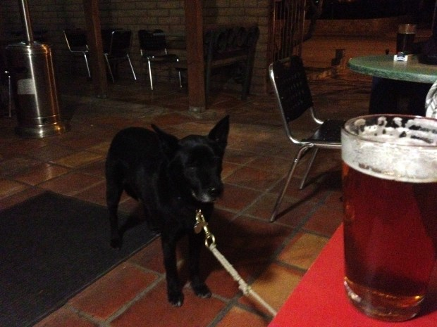 Abby looking at my IPA at High Desert Brewing Company, Las Cruces, New Mexico