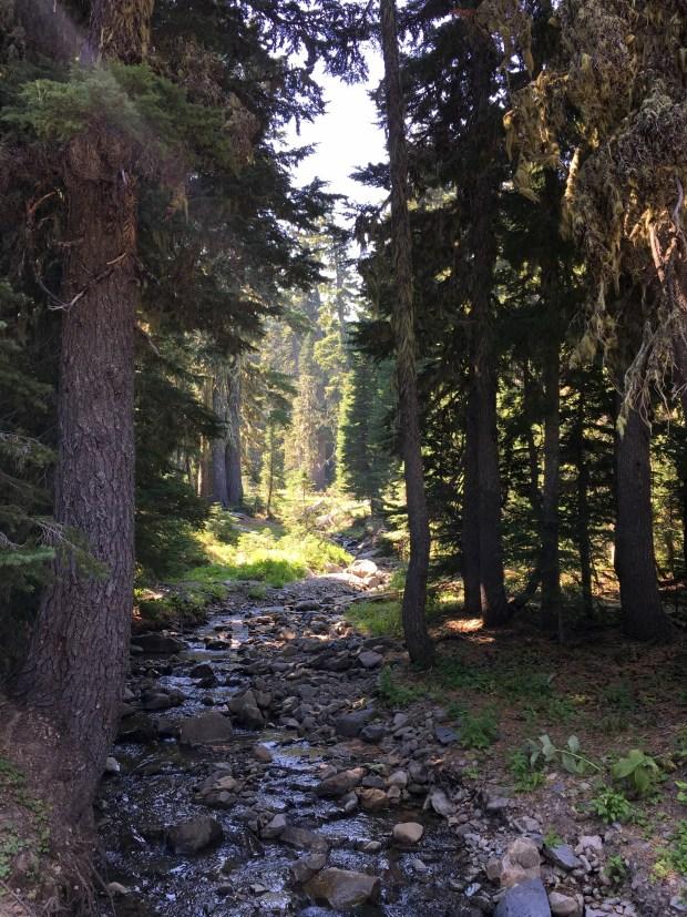 2016-09-08-oregon_redwoods_iphone-007