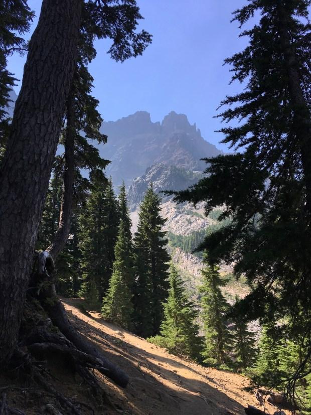 2016-09-08-oregon_redwoods_iphone-019
