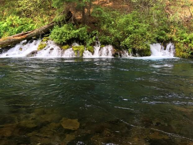 2016-09-08-oregon_redwoods_iphone-041