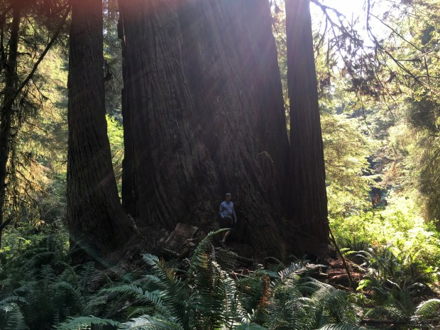 2016-09-08-oregon_redwoods_iphone-326