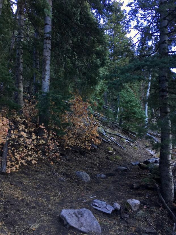 2016-10-23-kolobterr_pinevalleymtn_iphone-168