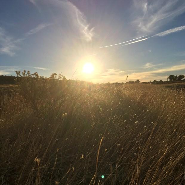 Sunset dogwalk