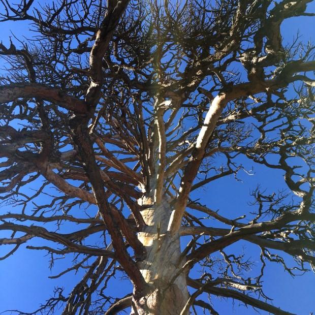 pinetreetrail_iphone-056