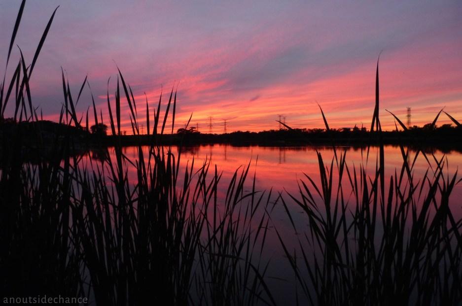 Bowmanville Marsh 7 – P1100076