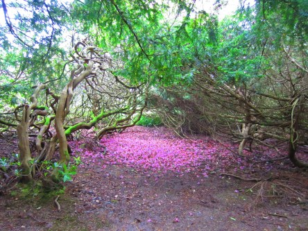 04052019 Faery Bed