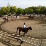 ストレス発散法のひとつにいかが?初乗馬体験談♬お馬さんの優しさと賢さと力強さと♬