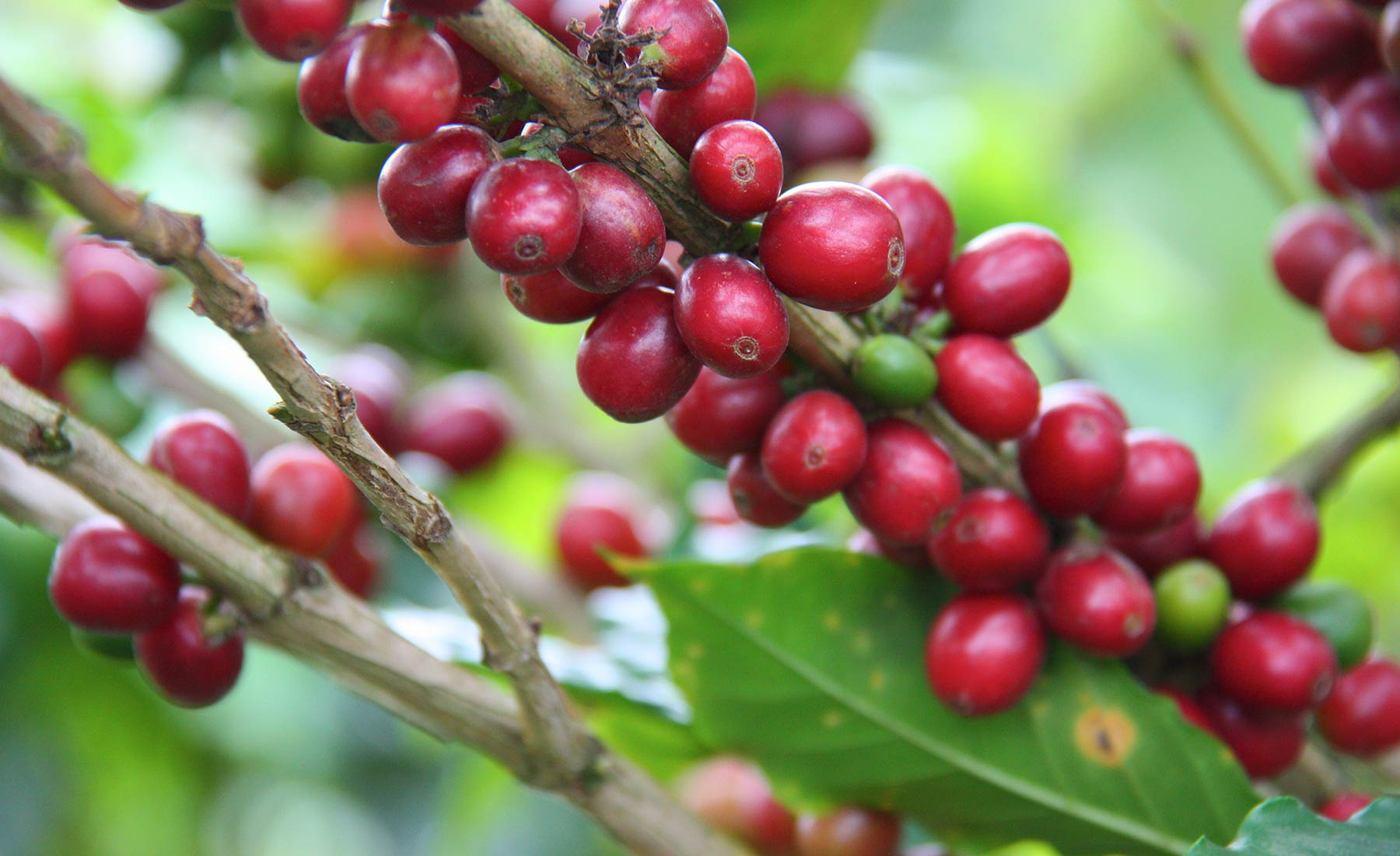 cafe y plantas