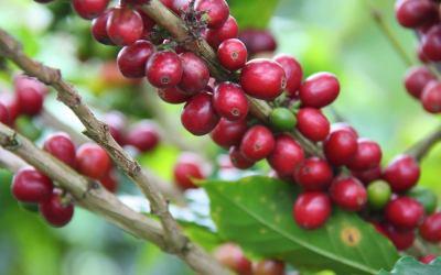 El café, el mejor amigo de las plantas