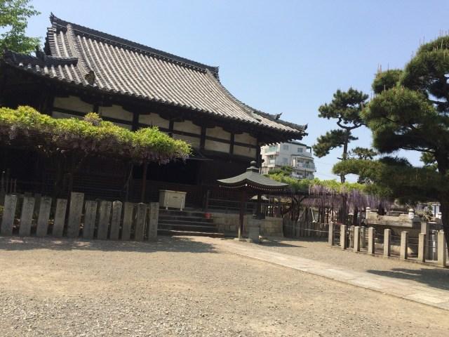 藤井寺の藤祭2(2015年)