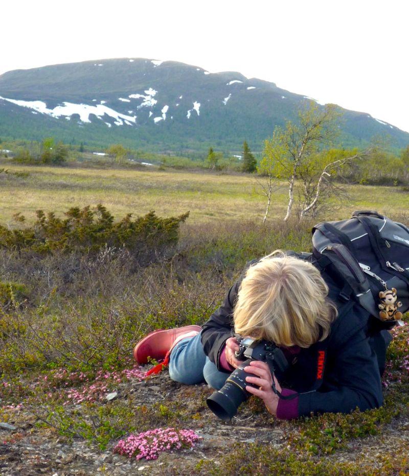 Blomsterfotografering på Blomsterfjället Ansätten. Foto © Föreningen Blomsterleden.